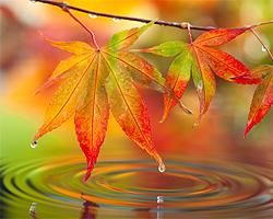 Herbstbepflanzung Garten und Terrasse