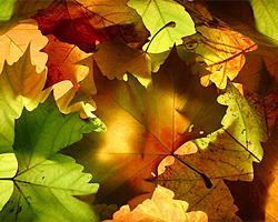 Herbstpflege im Garten