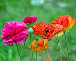 Gartensaison Sommer