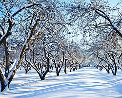 Garten Im Winter garten im winter winterpflege im garten gartenkalender