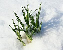 Winterbepflanzung | Pflanzen Für Winter | Winterblüher | Garten ... Pflanzen Garten Im Winter