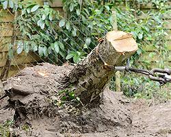 Baumstümpfe entfernen
