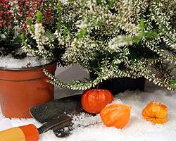 winterbepflanzung f r den balkon balkonbepflanzung im winter. Black Bedroom Furniture Sets. Home Design Ideas
