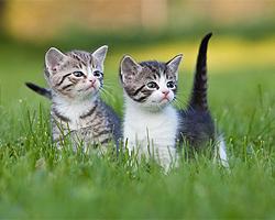 Katzenkräuter