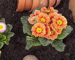 Blumen pflanzen  Blumen einpflanzen | Blumen richtig pflanzen