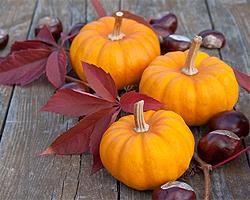 Gartentipps im Oktober für Kürbisse