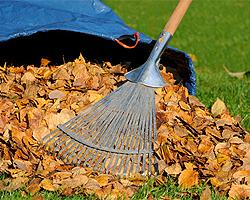 Gartentipps im Oktober für Herbstlaub