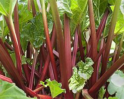 Gartentipps im Oktober für Rhabarber teilen