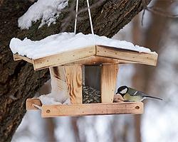 Gartentipps im Dezember für Vogelfütterung