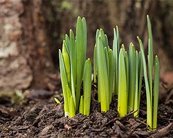 Gartentipps im Februar für Winterschutz