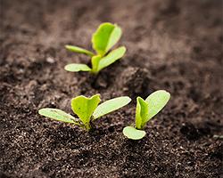Gartentipps im April für Aussaat