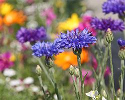 Gartentipps im April für Sommerblumen