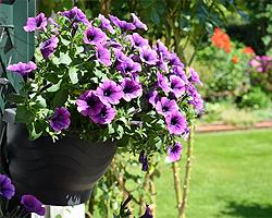 Blumen ausputzen