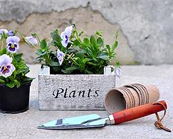Holzkisten bepflanzen