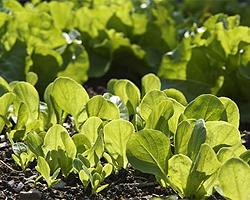 Gartentipps im Mai für Aussaat