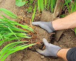 Gartentipps im Mai für Vermehrung