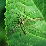 Insekt makro