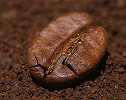 Kaffeesatz Als Dünger | Tipps Zum Düngen Mit Kaffeesatz Dunger Fur Den Garten Pflanzen Kuche