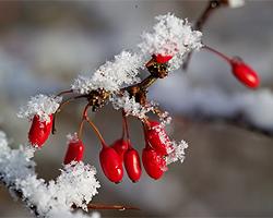 winterschutz im garten, Garten und Bauten