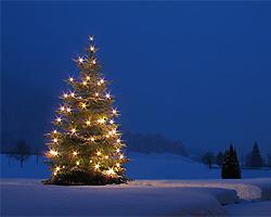 Weihnachtsbeleuchtung im garten selbstgemachte deko - Weihnachtsbeleuchtung garten ...