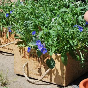 bepflanzte Holzkisten