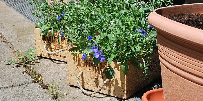Prächtig Holzkisten bepflanzen | bepflanzte Holzkisten selber bauen #YG_06