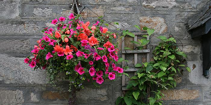 blumenampeln f r balkon terrasse und garten bepflanzen befestigen. Black Bedroom Furniture Sets. Home Design Ideas