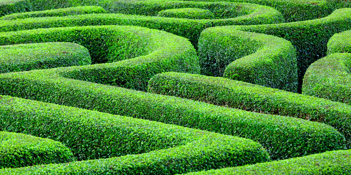 Pflanzen Für Schattigen Garten ist gut ideen für ihr haus design ideen