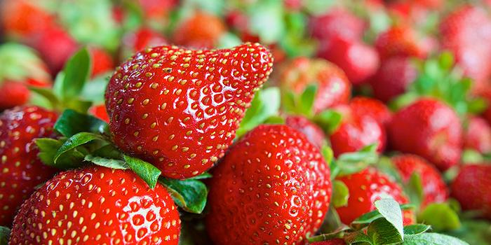 Erdbeeren im Freiland