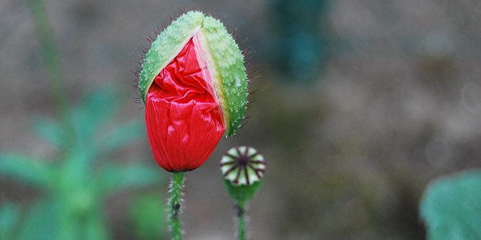Pflanzen Für Schattigen Garten ist genial stil für ihr haus ideen