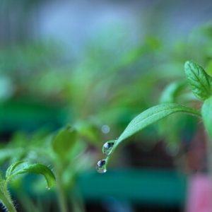 Pflanzzeit für Gemüse