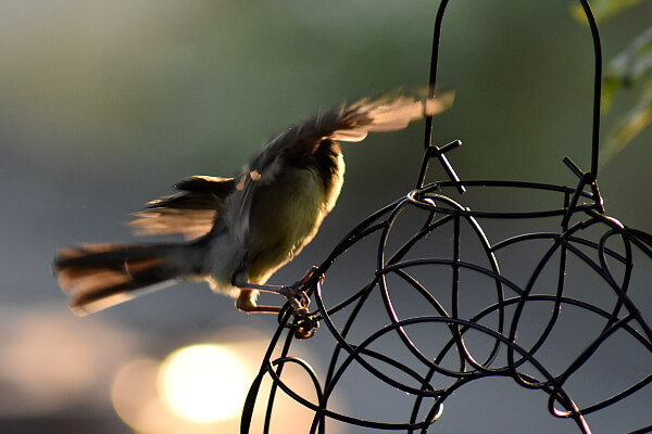 Vögel füttern - Meise
