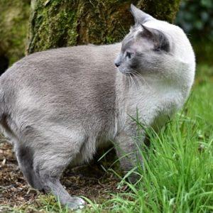 Katze - Katzenkräuter